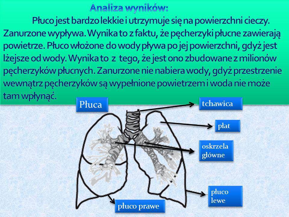 płuco prawe tchawica płat oskrzela główne oskrzela główne płuco lewe Płuca