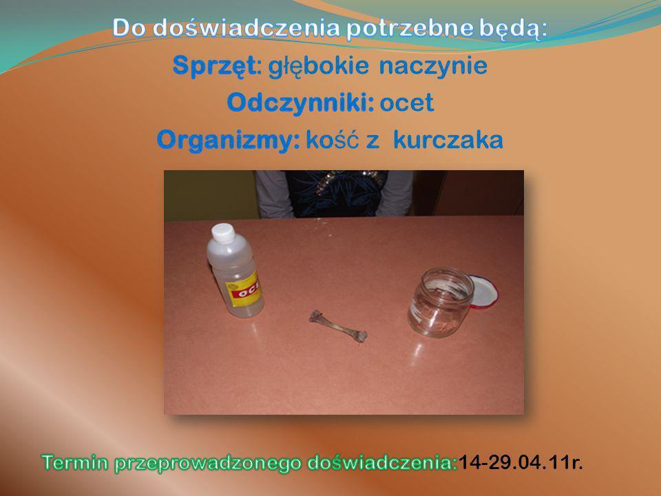 Próba kontrolna: Umieszczenie płuca świni w wodzie.