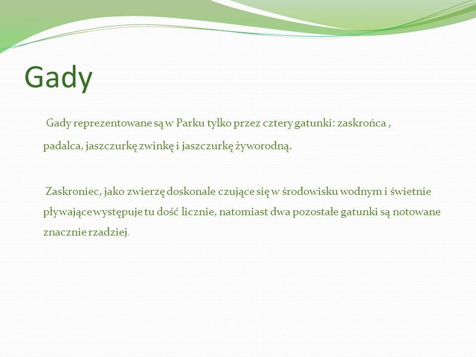 Gady Gady reprezentowane są w Parku tylko przez cztery gatunki: zaskrońca, padalca, jaszczurkę zwinkę i jaszczurkę żyworodną. Zaskroniec, jako zwierzę