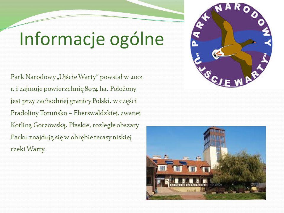 Informacje ogólne Park Narodowy Ujście Warty powstał w 2001 r. i zajmuje powierzchnię 8074 ha. Położony jest przy zachodniej granicy Polski, w części