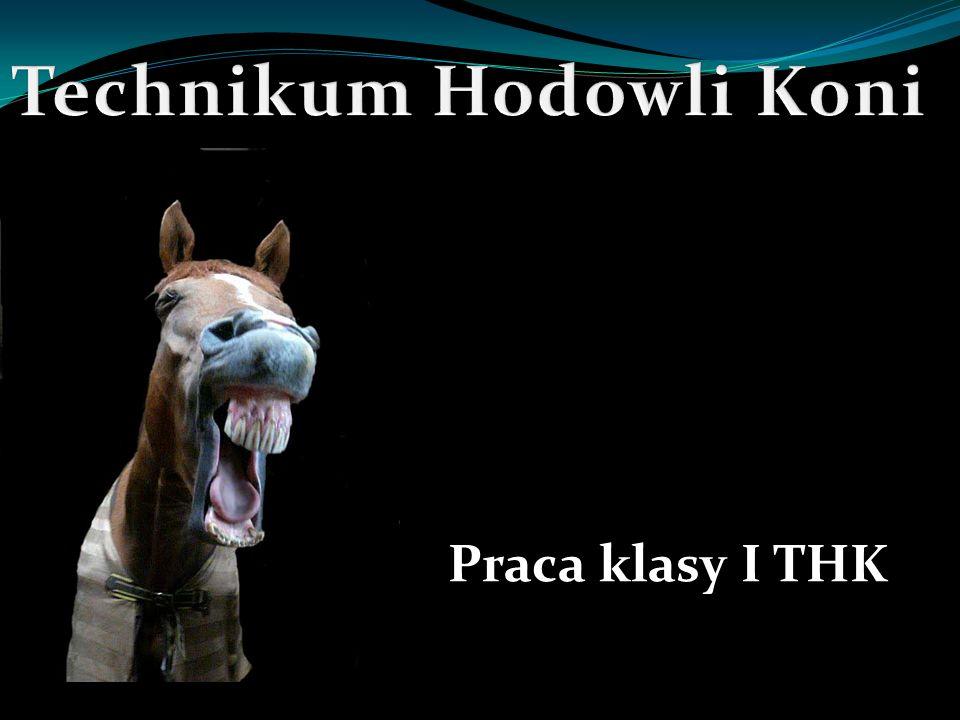 Koń i jego początki: PIERWSZE KONIE Przed około 60 milionami lat rozpoczęła sie ewolucja dzisiejszego konia domowego.
