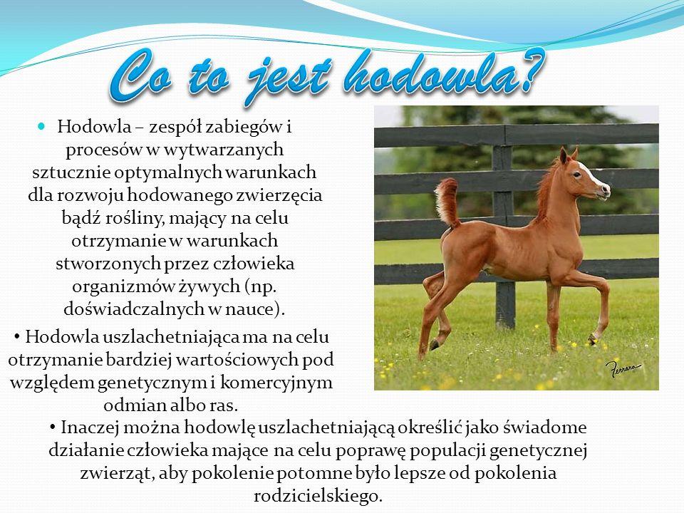 Najstarsza stadnina: Najstarsza stadnina koni na ziemiach polskich została założona w 1817 roku w Janowie Podlaskim, po kongresie wiedeńskim na wniosek Rady Administracyjnej Kr ó lestwa Kongresowego za zgodą cara Aleksandra