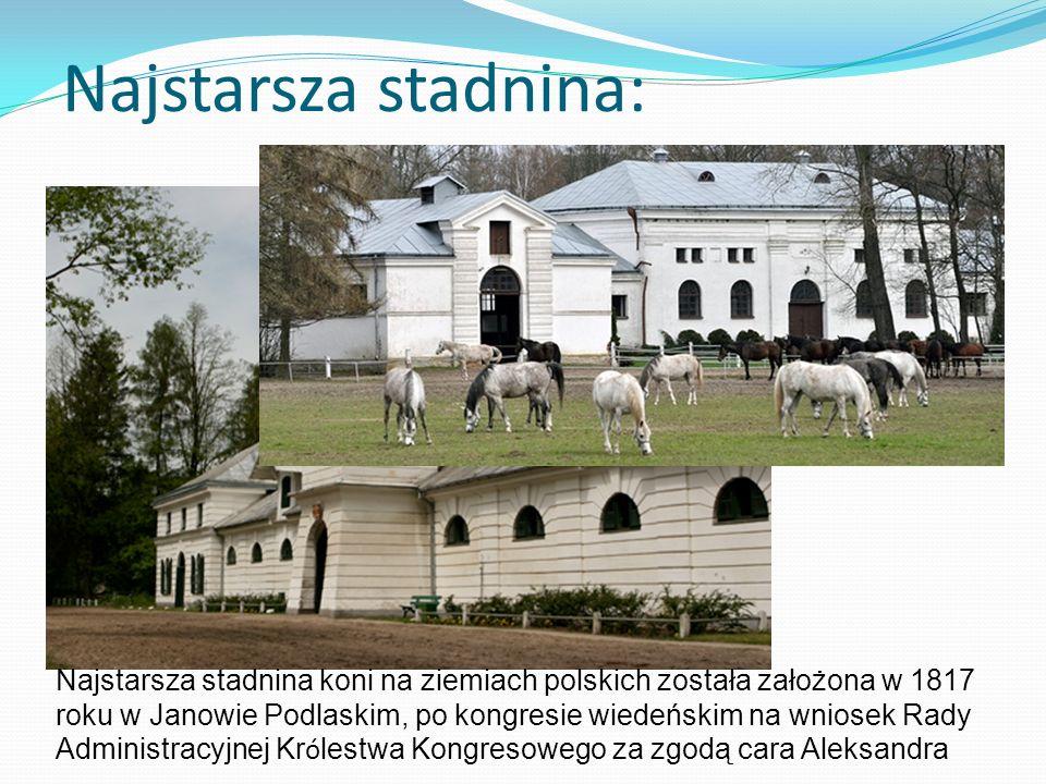 Najstarsza stadnina: Najstarsza stadnina koni na ziemiach polskich została założona w 1817 roku w Janowie Podlaskim, po kongresie wiedeńskim na wniose
