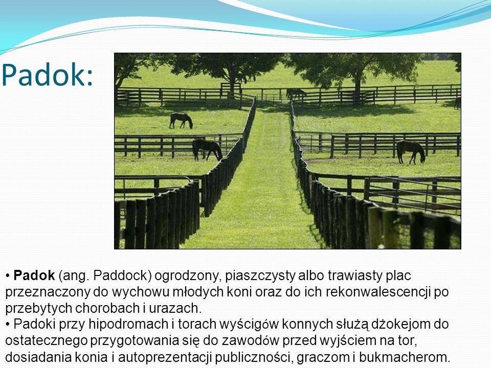 Padok: Padok (ang. Paddock) ogrodzony, piaszczysty albo trawiasty plac przeznaczony do wychowu młodych koni oraz do ich rekonwalescencji po przebytych
