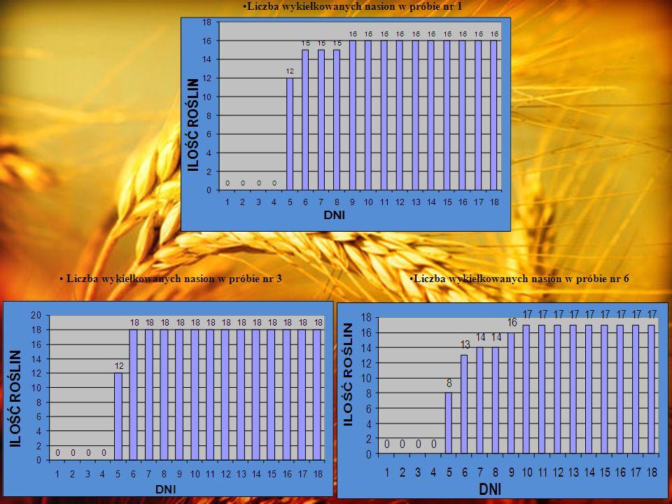 PRÓBA NR 1 PRÓBA NR 2 PRÓBA NR 3 PRÓBA NR 4 PRÓBA NR 5 PRÓBA NR 6 Wykresy podsumowujące wyniki obserwacji: Siła kiełkowania jęczmienia zwyczajnego w poszczególnych próbach.