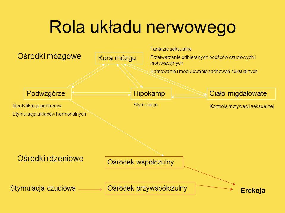 Rola układu nerwowego Ośrodki mózgowe Ośrodki rdzeniowe Kora mózgu Podwzgórze HipokampCiało migdałowate Ośrodek współczulny Ośrodek przywspółczulny Ko