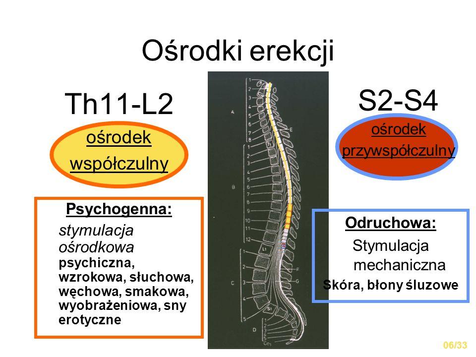 Ośrodki erekcji Th11-L2 ośrodek współczulny S2-S4 ośrodek przywspółczulny Psychogenna: stymulacja ośrodkowa psychiczna, wzrokowa, słuchowa, węchowa, s