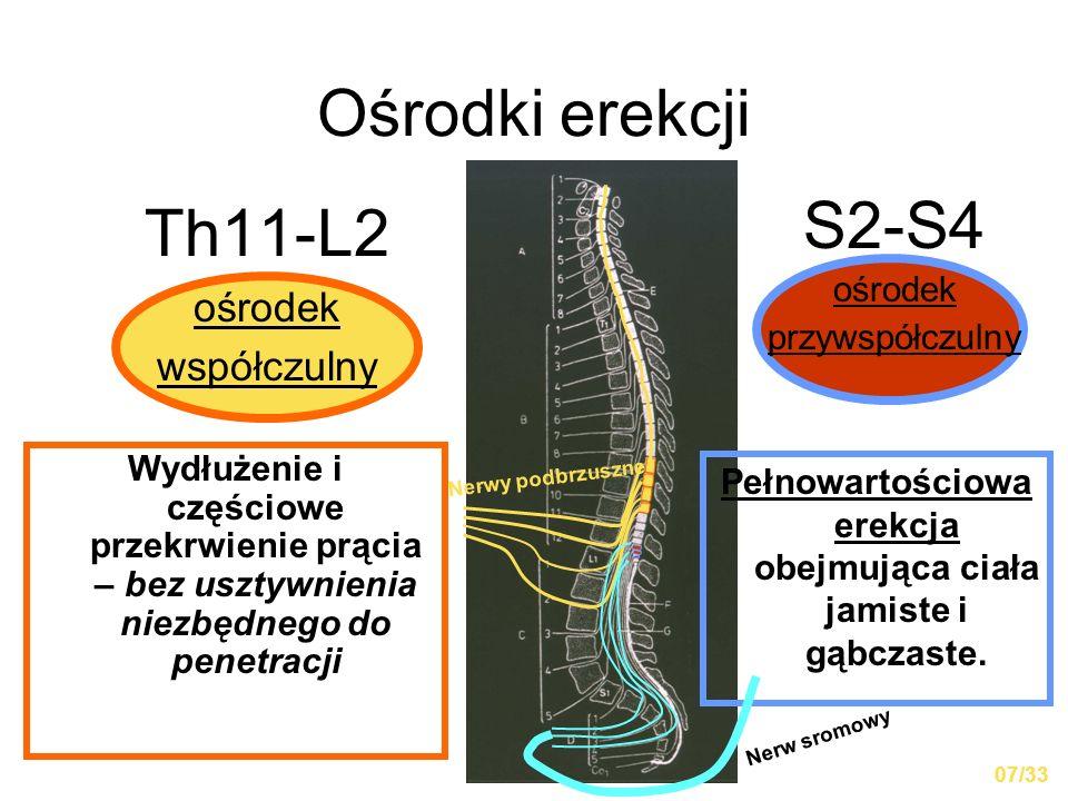 Ośrodki erekcji Th11-L2 ośrodek współczulny S2-S4 ośrodek przywspółczulny Wydłużenie i częściowe przekrwienie prącia – bez usztywnienia niezbędnego do