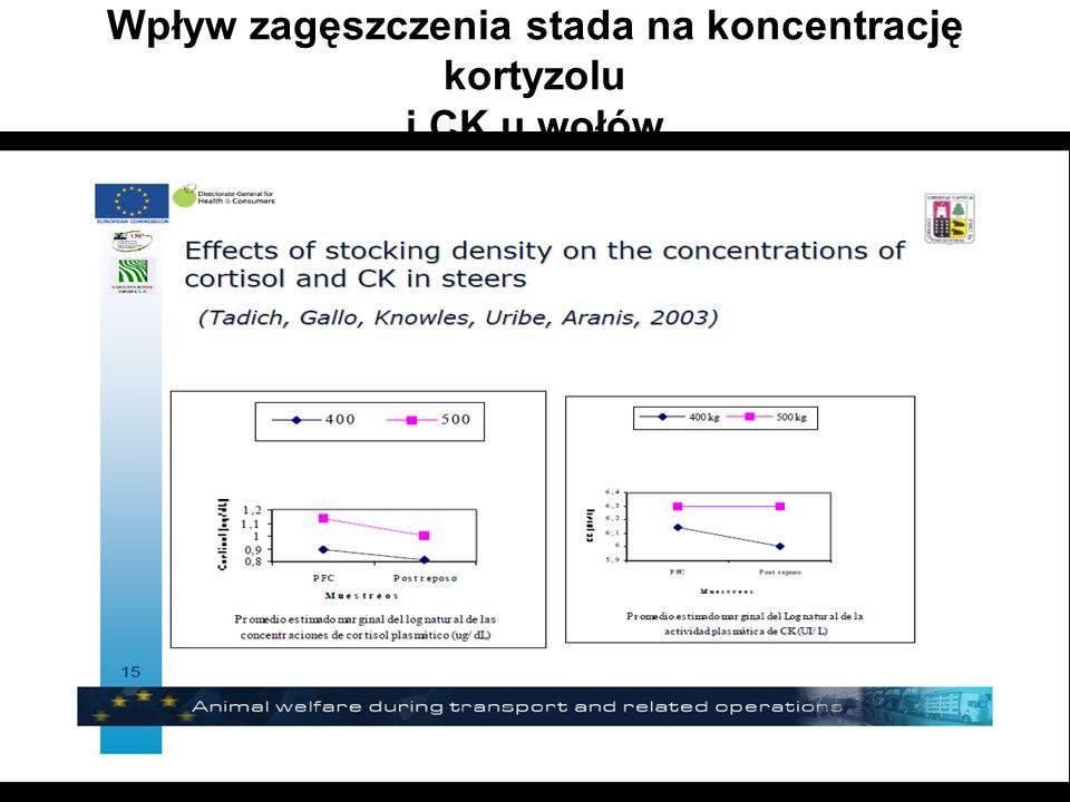 (Tadich,Gallo,Knowles,Uribe,Aranis,2003) Wpływ zagęszczenia stada na koncentrację kortyzolu i CK u wołów (Tadich,Gallo, Knowles, Uribe, Aranis,2003) Kortyzol (poziom po odpoczynku) 400kg/m2-poziom spada 500kg/m2-poziom spada wyraźniej CK (poziom po odpoczynku) 400kg/m2-poziom spada 500kg/m2-na jednym poziomie