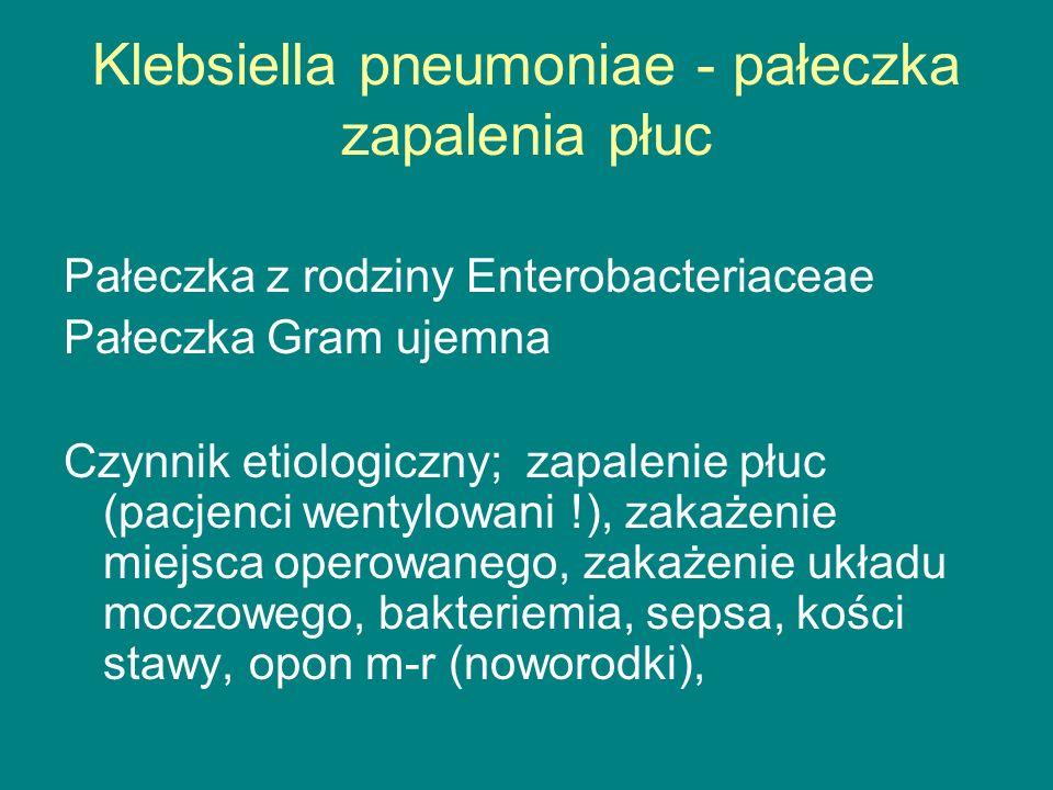 Klebsiella pneumoniae - pałeczka zapalenia płuc Pałeczka z rodziny Enterobacteriaceae Pałeczka Gram ujemna Czynnik etiologiczny; zapalenie płuc (pacjenci wentylowani !), zakażenie miejsca operowanego, zakażenie układu moczowego, bakteriemia, sepsa, kości stawy, opon m-r (noworodki),