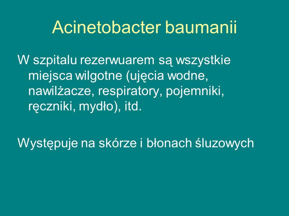 Acinetobacter baumanii W szpitalu rezerwuarem są wszystkie miejsca wilgotne (ujęcia wodne, nawilżacze, respiratory, pojemniki, ręczniki, mydło), itd.
