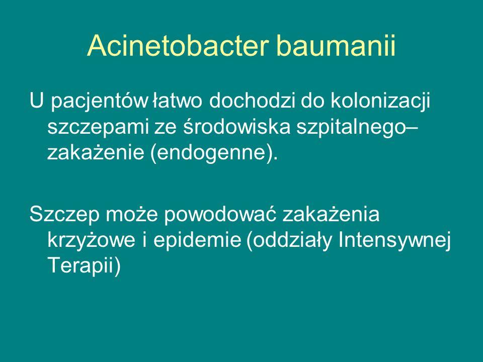 Acinetobacter baumanii U pacjentów łatwo dochodzi do kolonizacji szczepami ze środowiska szpitalnego– zakażenie (endogenne).