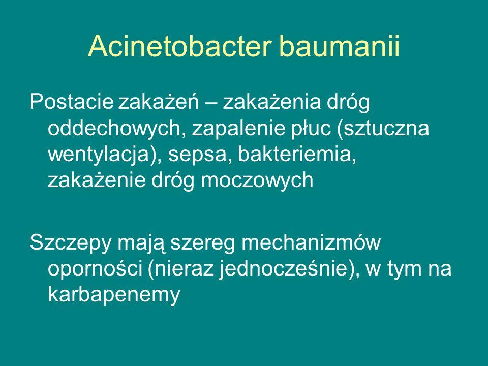 Acinetobacter baumanii Postacie zakażeń – zakażenia dróg oddechowych, zapalenie płuc (sztuczna wentylacja), sepsa, bakteriemia, zakażenie dróg moczowych Szczepy mają szereg mechanizmów oporności (nieraz jednocześnie), w tym na karbapenemy