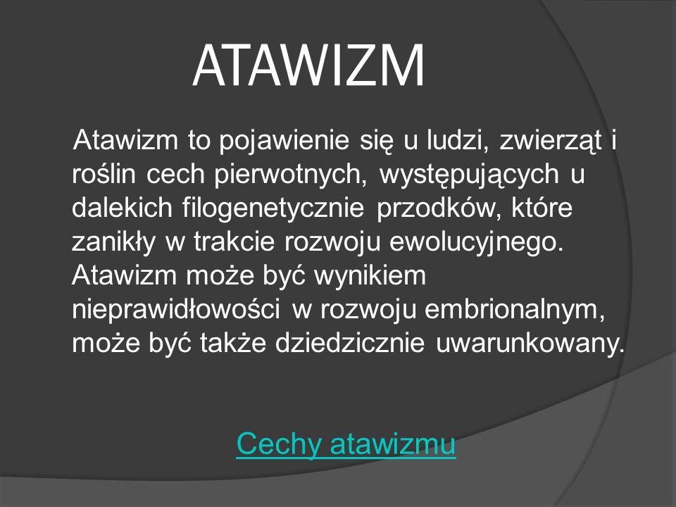 ATAWIZM Atawizm to pojawienie się u ludzi, zwierząt i roślin cech pierwotnych, występujących u dalekich filogenetycznie przodków, które zanikły w trak