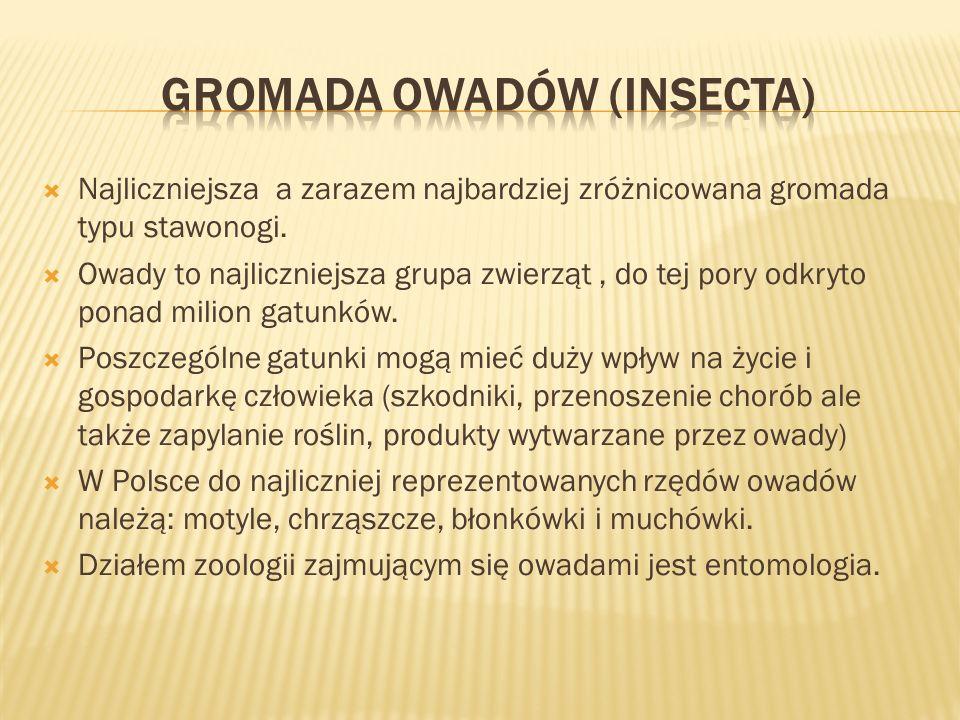 Dział zoologii zajmujący się owadami.Dawniej używano także terminu owadoznawstwo.