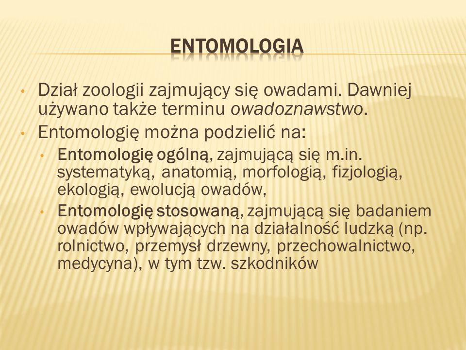 Dział zoologii zajmujący się owadami. Dawniej używano także terminu owadoznawstwo. Entomologię można podzielić na: Entomologię ogólną, zajmującą się m