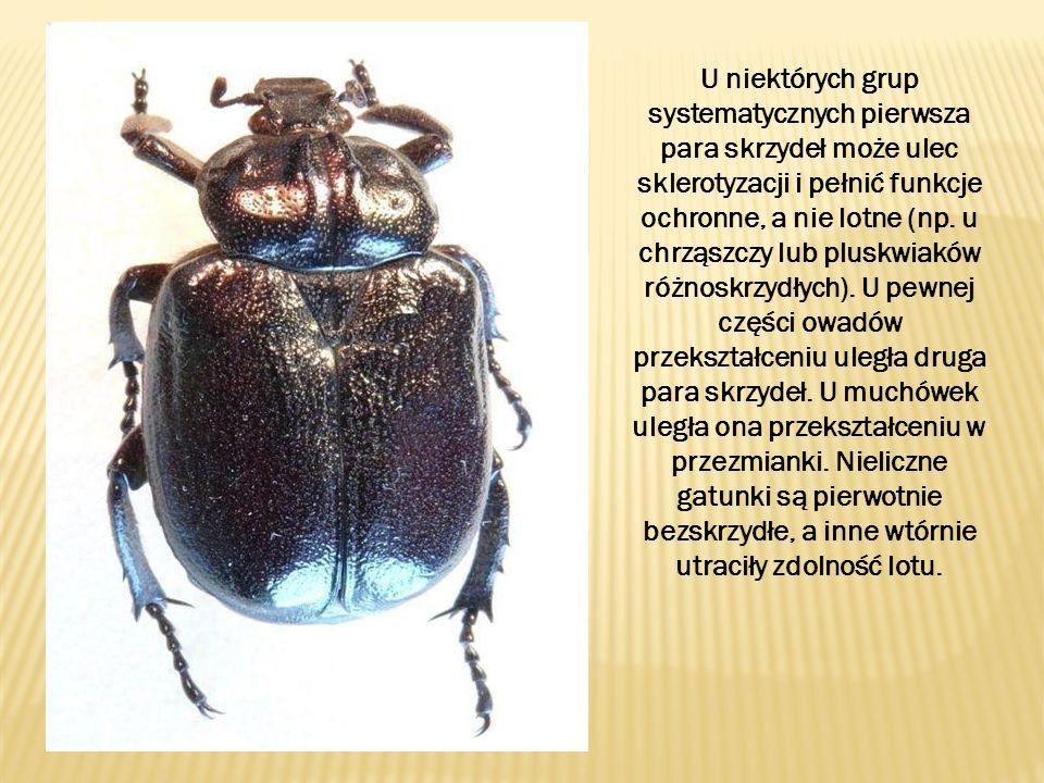 U niektórych grup systematycznych pierwsza para skrzydeł może ulec sklerotyzacji i pełnić funkcje ochronne, a nie lotne (np. u chrząszczy lub pluskwia