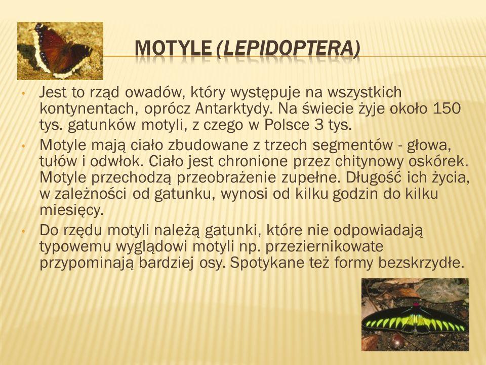 http://www.wikipedia.plhttp://www.wikipedia.pl [dostęp 24.02.2012] http://www.swiatmakrodotcom.wordpress.com [dostęp 24.02.2012] Owady- budowa zewnętrzna http://www.forum.linum.plhttp://www.forum.linum.pl [dostęp 24.02.2012] Stawonogi http://www.robale.pl/http://www.robale.pl/ [dostęp 24.02.2012] http://rosliny-i-zwierzeta.plhttp://rosliny-i-zwierzeta.pl [dostęp 24.02.2012] www.wikibooks.orgwww.wikibooks.org [dostęp 24.02.2012] Pszczelarstwo, Biologia Nr Slajdu- link do strony ze zdjęciem: 11, 8, 20, 21, 22, 23, 24, 25, 26, 27, 28, 30, 31, 32, 33820212223242526272830313233