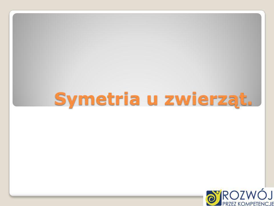 Symetria u zwierząt.