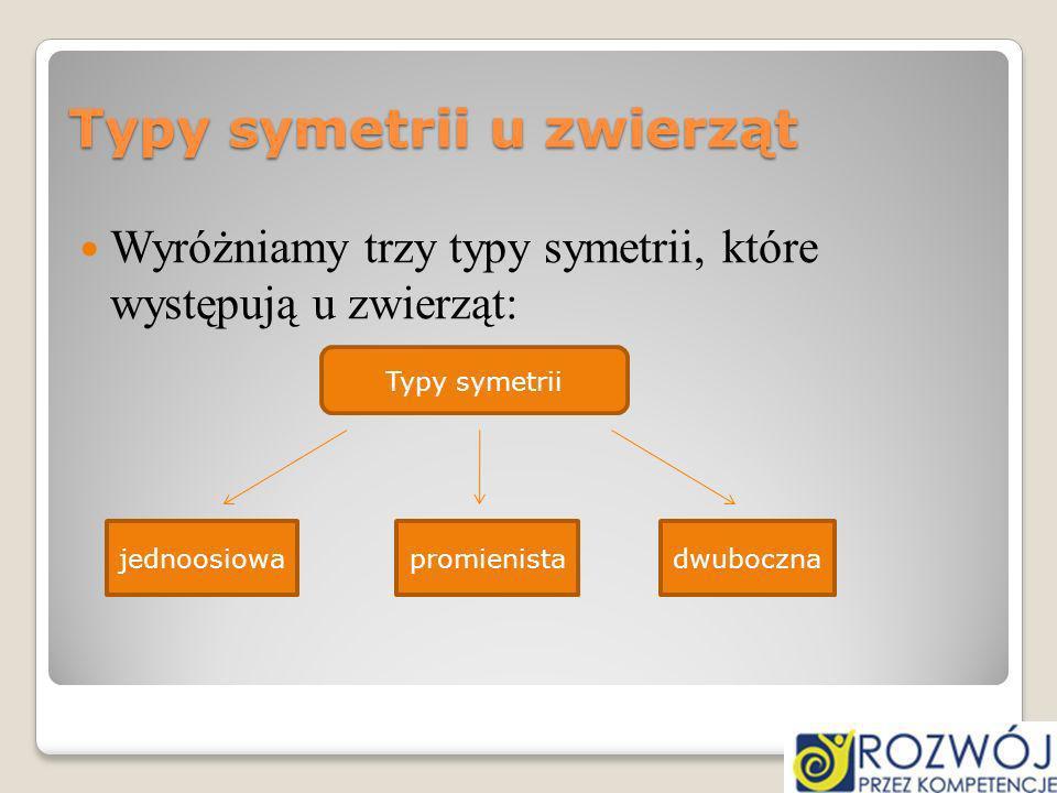 Typy symetrii u zwierząt Wyróżniamy trzy typy symetrii, które występują u zwierząt: jednoosiowapromienistadwuboczna Typy symetrii