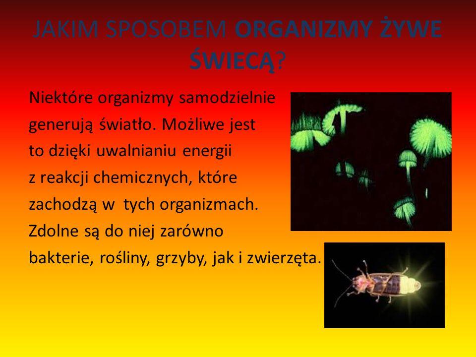 JAKIM SPOSOBEM ORGANIZMY ŻYWE ŚWIECĄ? Niektóre organizmy samodzielnie generują światło. Możliwe jest to dzięki uwalnianiu energii z reakcji chemicznyc