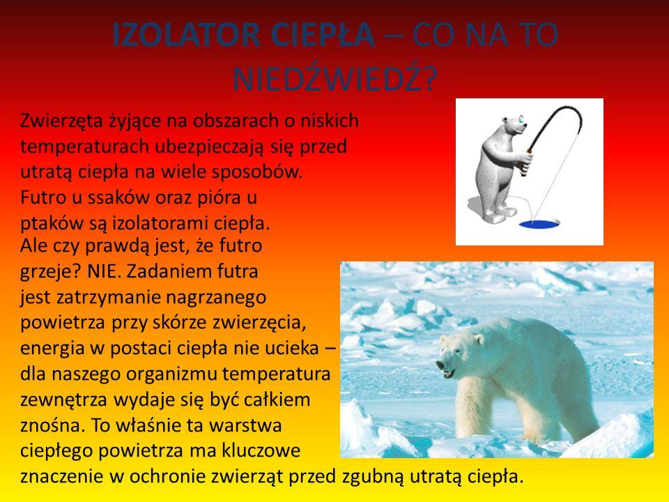 IZOLATOR CIEPŁA – CO NA TO NIEDŹWIEDŹ? Zwierzęta żyjące na obszarach o niskich temperaturach ubezpieczają się przed utratą ciepła na wiele sposobów. F