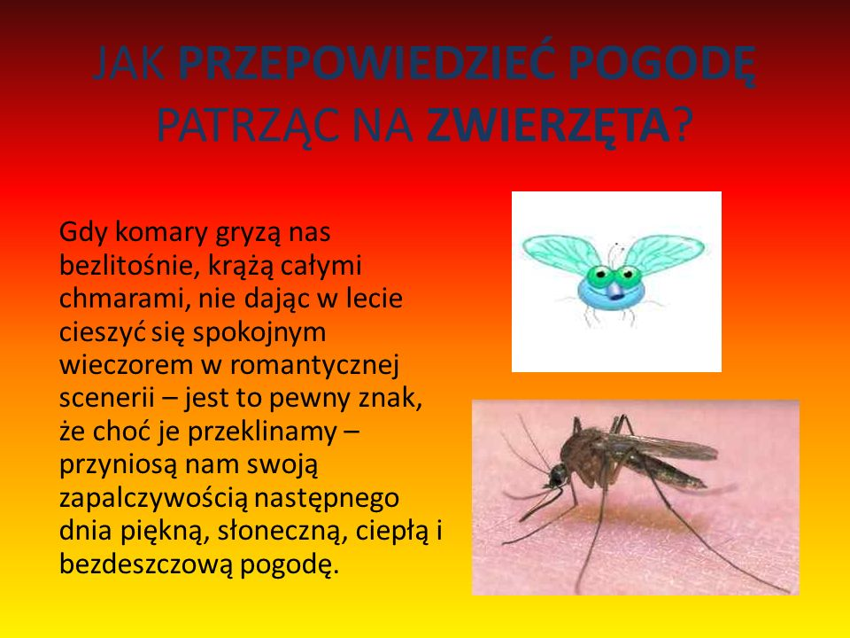 JAK PRZEPOWIEDZIEĆ POGODĘ PATRZĄC NA ZWIERZĘTA? Gdy komary gryzą nas bezlitośnie, krążą całymi chmarami, nie dając w lecie cieszyć się spokojnym wiecz