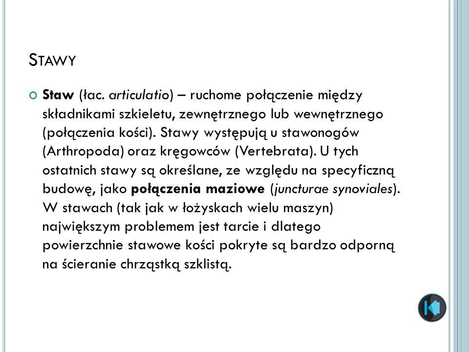 S TAWY Staw (łac. articulatio) – ruchome połączenie między składnikami szkieletu, zewnętrznego lub wewnętrznego (połączenia kości). Stawy występują u