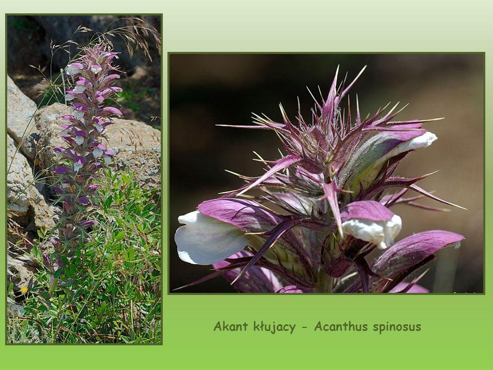 Oprócz drzew i roślin, które spotkać można w innych regionach Grecji i na obszarze śródziemnomorskim, na Krecie występuje wiele gatunków roślin nigdzi