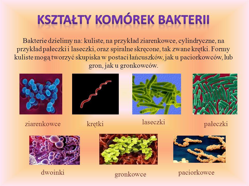 Bakterie, najmniejsze spośród wszystkich organizmów, są sprzymierzeńcami ludzi, ale także ich utrapieniem. Bakterie można spotkać wszędzie ponieważ po