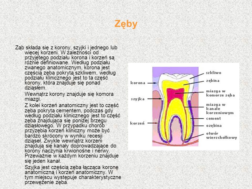 Zęby Ząb składa się z korony, szyjki i jednego lub więcej korzeni. W zależności od przyjętego podziału korona i korzeń są różnie definiowane. Według p
