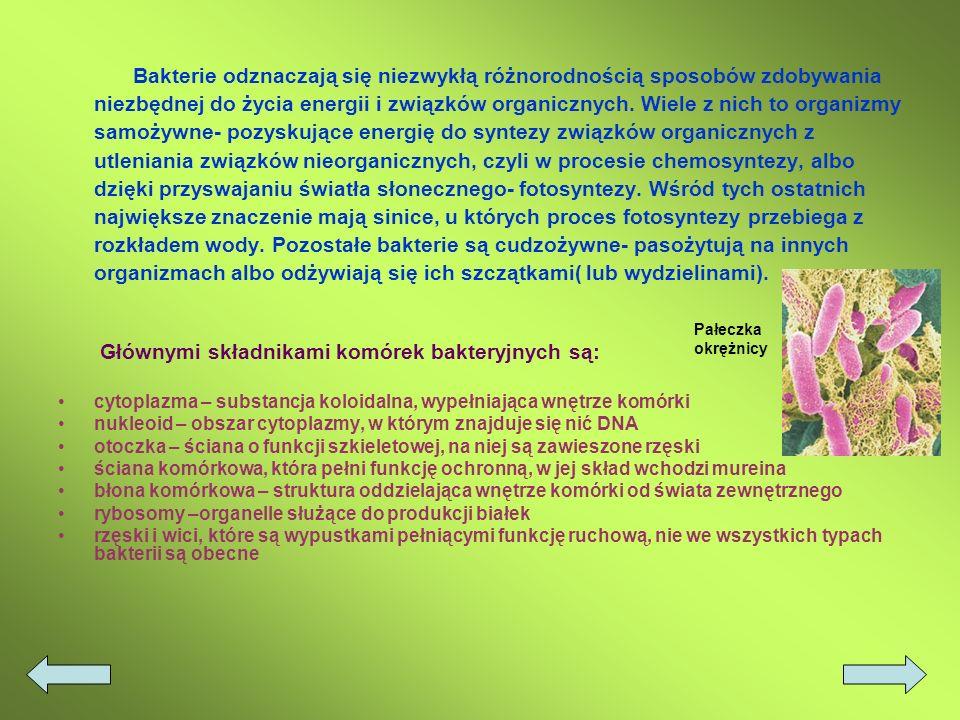 2. Bakterie Są to jednokomórkowce lub zespoły komórek o budowie prokariotycznej. Cechą charakterystyczną budowy komórek bakteryjnych jest brak otoczon