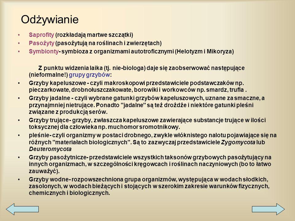 Grzyby rozmnażają się: wegetatywnie –przez podział –pączkowanie –Fragmentacje plechy płciowo –izogamia –anizogamia –oogamia –gametangiogamia –somatoga