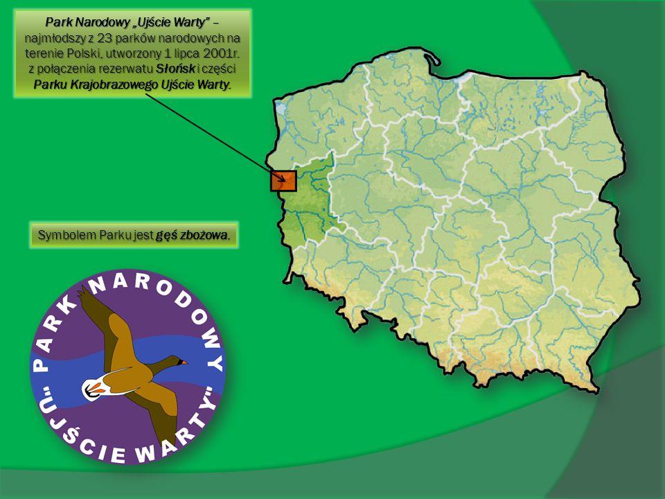 Park Narodowy Ujście Warty – najmłodszy z 23 parków narodowych na terenie Polski, utworzony 1 lipca 2001r. z połączenia rezerwatu Słońsk i części Park