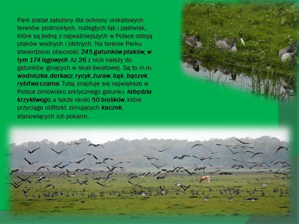 Park został założony dla ochrony unikatowych terenów podmokłych, rozległych łąk i pastwisk, które są jedną z najważniejszych w Polsce ostoją ptaków wo