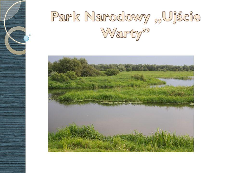 Park Narodowy Ujście Warty powstał w 2001 r.i zajmuje powierzchnię 8074 ha.
