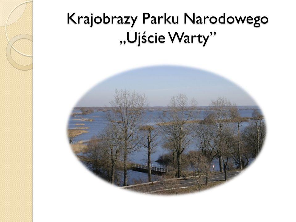 Krajobrazy Parku Narodowego Ujście Warty