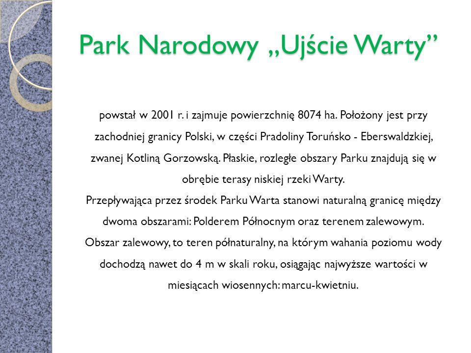 Park Narodowy Ujście Warty powstał w 2001 r. i zajmuje powierzchnię 8074 ha. Położony jest przy zachodniej granicy Polski, w części Pradoliny Toruńsko