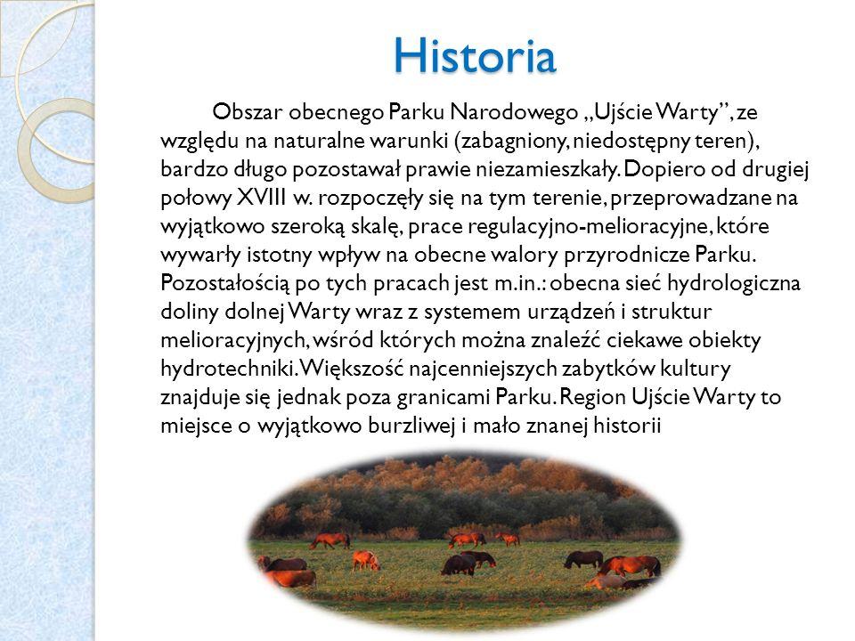 Historia Obszar obecnego Parku Narodowego Ujście Warty, ze względu na naturalne warunki (zabagniony, niedostępny teren), bardzo długo pozostawał prawi