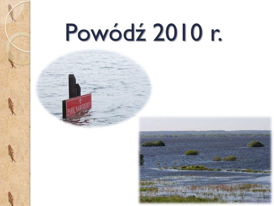 Powódź 2010 r.