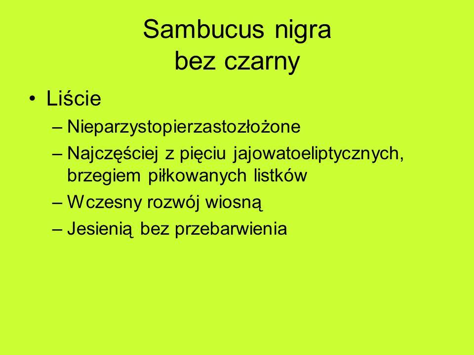 Sambucus nigra bez czarny Liście –Nieparzystopierzastozłożone –Najczęściej z pięciu jajowatoeliptycznych, brzegiem piłkowanych listków –Wczesny rozwój wiosną –Jesienią bez przebarwienia