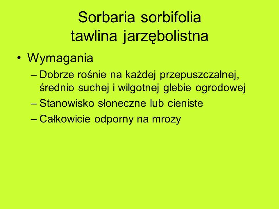 Sorbaria sorbifolia tawlina jarzębolistna Wymagania –Dobrze rośnie na każdej przepuszczalnej, średnio suchej i wilgotnej glebie ogrodowej –Stanowisko słoneczne lub cieniste –Całkowicie odporny na mrozy