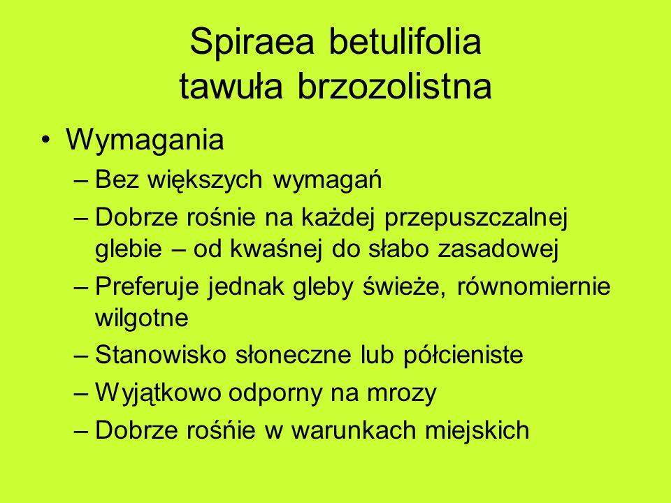 Spiraea betulifolia tawuła brzozolistna Wymagania –Bez większych wymagań –Dobrze rośnie na każdej przepuszczalnej glebie – od kwaśnej do słabo zasadowej –Preferuje jednak gleby świeże, równomiernie wilgotne –Stanowisko słoneczne lub półcieniste –Wyjątkowo odporny na mrozy –Dobrze rośńie w warunkach miejskich