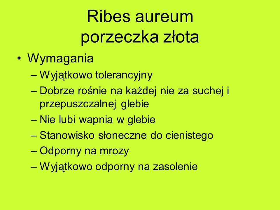 Ribes aureum porzeczka złota Wymagania –Wyjątkowo tolerancyjny –Dobrze rośnie na każdej nie za suchej i przepuszczalnej glebie –Nie lubi wapnia w glebie –Stanowisko słoneczne do cienistego –Odporny na mrozy –Wyjątkowo odporny na zasolenie