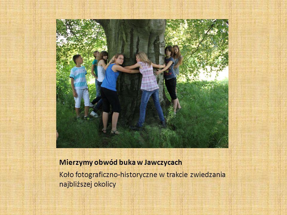 Mierzymy obwód buka w Jawczycach Koło fotograficzno-historyczne w trakcie zwiedzania najbliższej okolicy