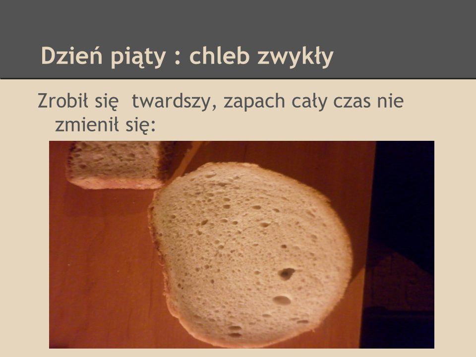 Dzień piąty : chleb zwykły Zrobił się twardszy, zapach cały czas nie zmienił się: