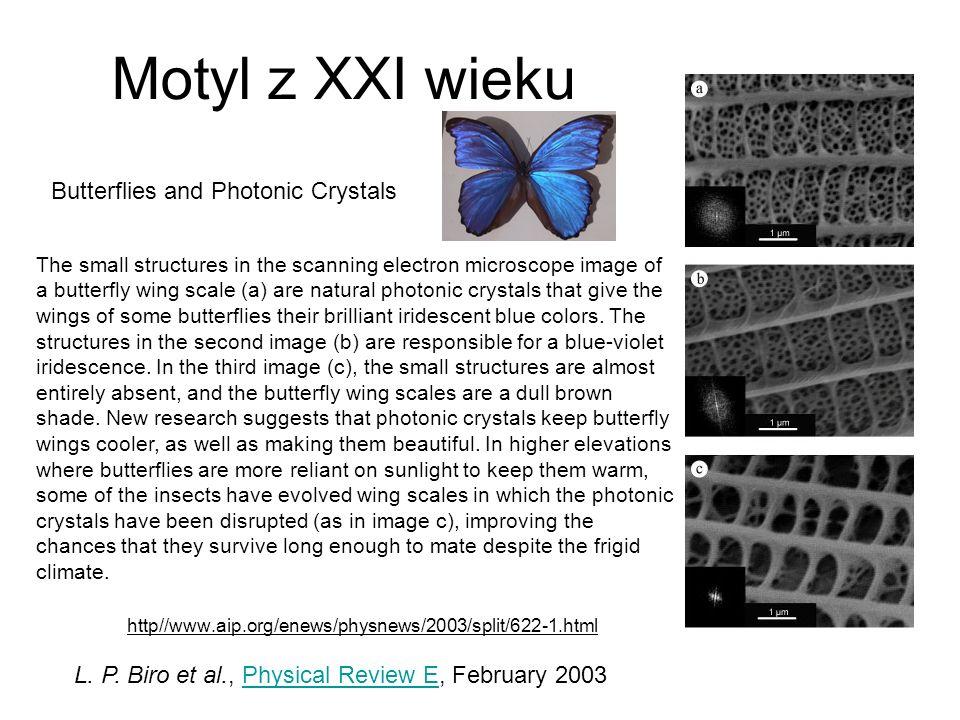 http//www.aip.org/enews/physnews/2003/split/622-1.html Motyl z Brazylii