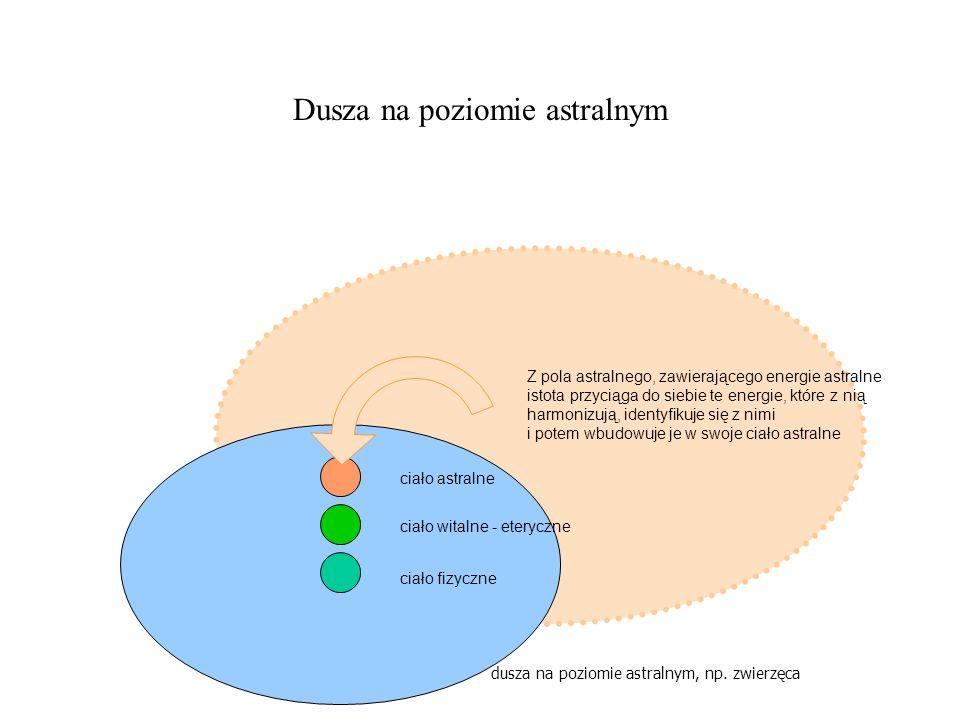 Dusza na poziomie astralnym ciało fizyczne ciało witalne - eteryczne ciało astralne Z pola astralnego, zawierającego energie astralne istota przyciąga