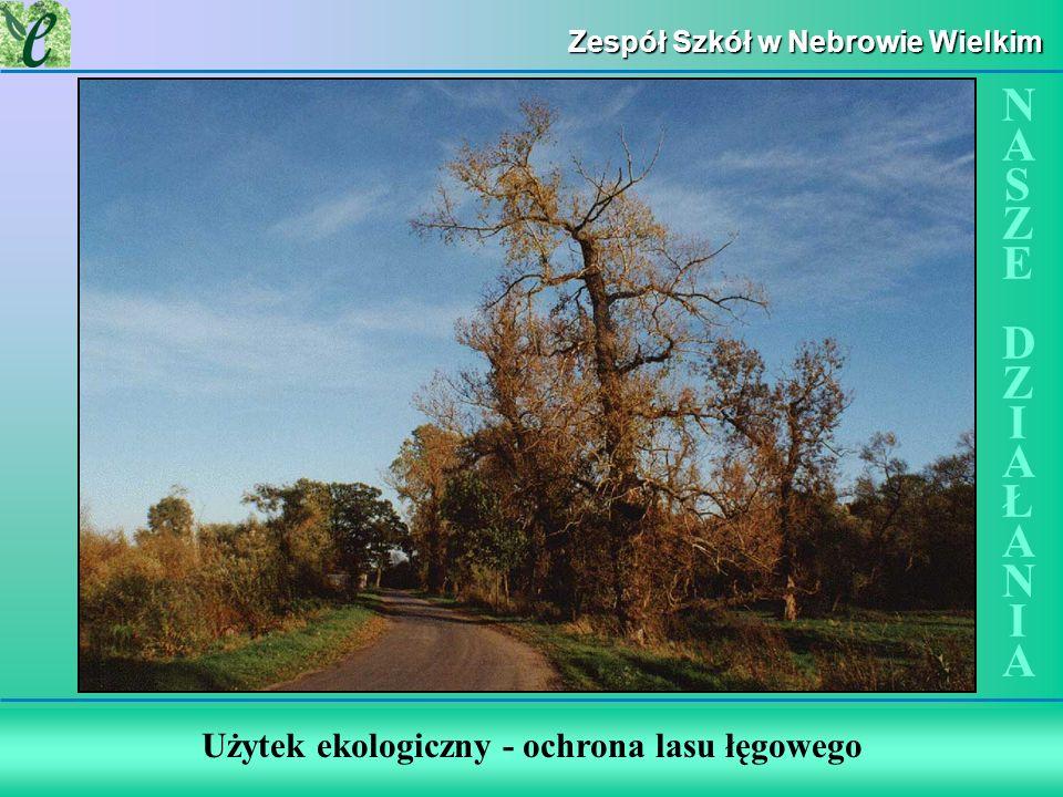 Zespół Szkół w Nebrowie Wielkim Użytek ekologiczny - ochrona lasu łęgowego NASZE DZIAŁANIANASZE DZIAŁANIA