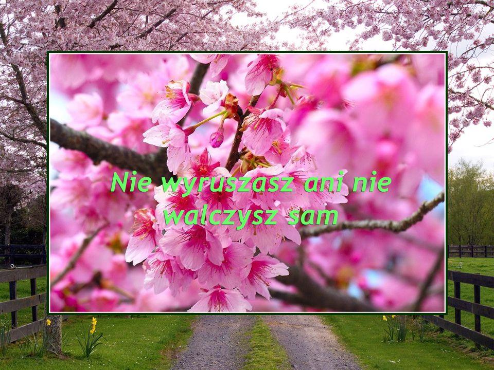 Adorujmy zamiary Boga i Jego Opatrzności Adorujmy zamiary Boga i Jego Opatrzności